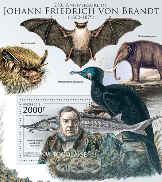 Johan Friedrich von Brandt (1802-1879)(Acipenser oxyrhynchus) - Issue of Togo postage stamps