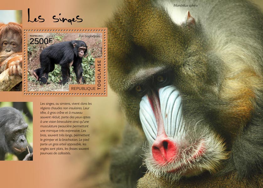 Monkeys - Issue of Togo postage stamps