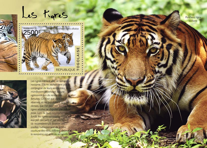 Tigers - Issue of Togo postage stamps