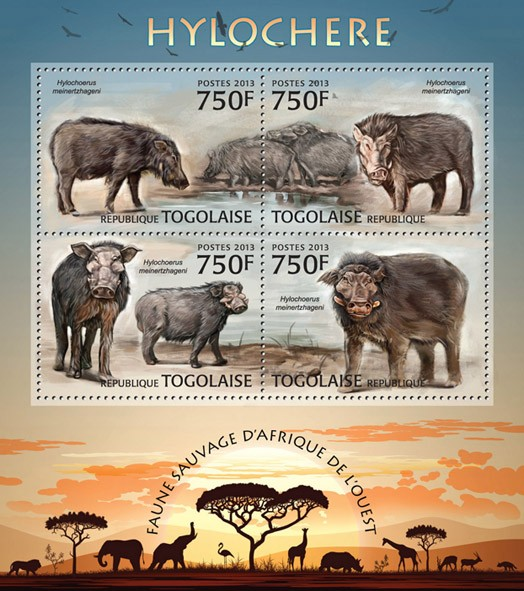 Forest hog - Issue of Togo postage stamps