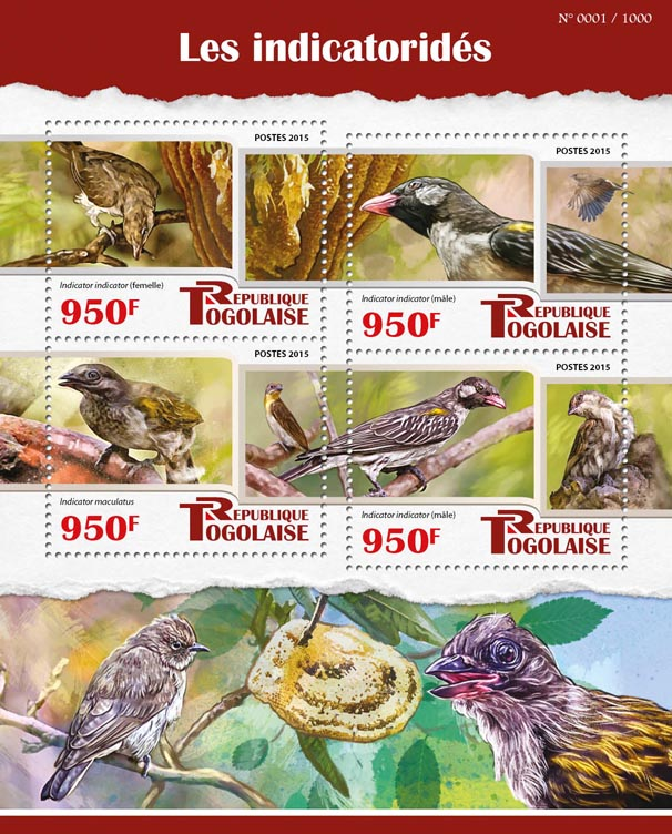 Honeyguide - Issue of Togo postage stamps