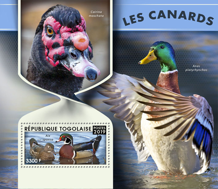 Ducks - Issue of Togo postage stamps