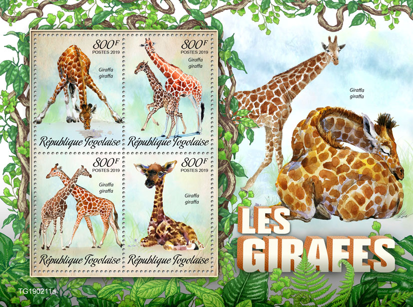 Giraffes - Issue of Togo postage stamps