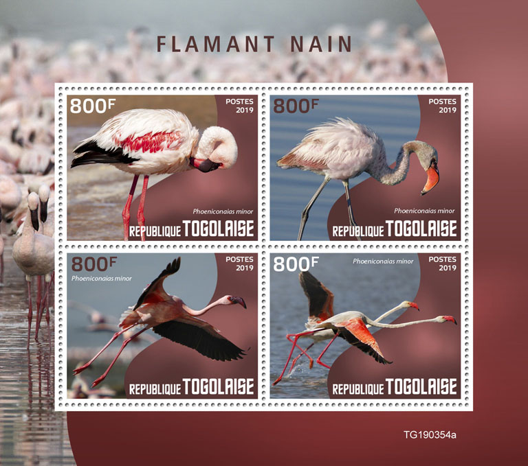 Lesser flamingo - Issue of Togo postage stamps