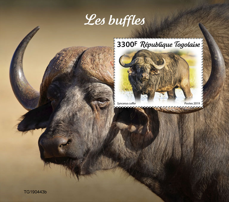 Buffalos - Issue of Togo postage stamps
