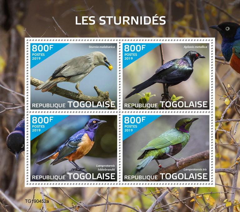 Starlings - Issue of Togo postage stamps